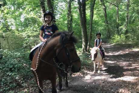 Stages poney / cheval vacances de la Toussaint