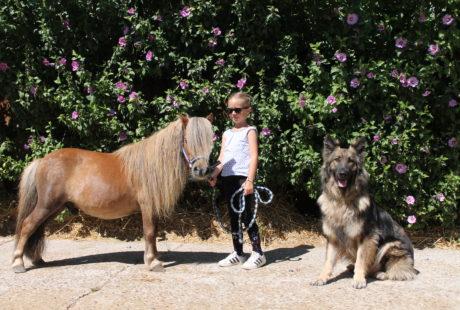 Les inscriptions 2021/2022 pour le centre équestre / poney club sont ouvertes !