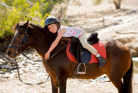 Stage poney et cheval vacances de la Toussaint